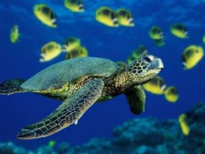 turtle-dfas